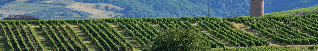 Photo de ClubMed Sant' Ambroggio Vins